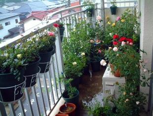 07veranda_garden