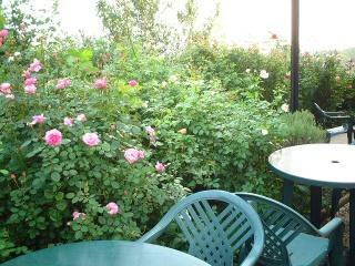 Rosecafe_summer_01