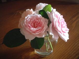 Summer_roses_01