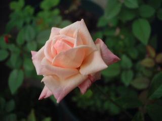 Perle_des_jardins03