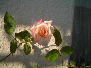 Mllefranziska_kruger17