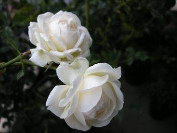 08rose_marie_04