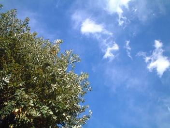 0811winter_sky_01