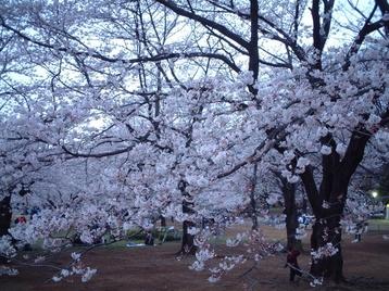 2009yozakura_01