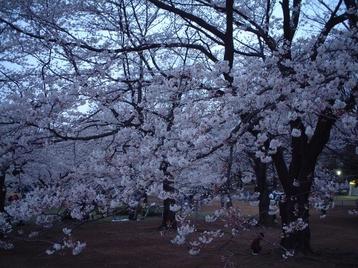 2009yozakura