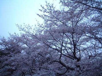 2009yozakura_02