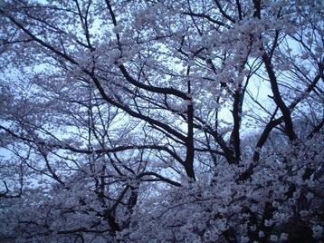 2009yozakura_03