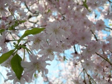 2009nogawa3_02