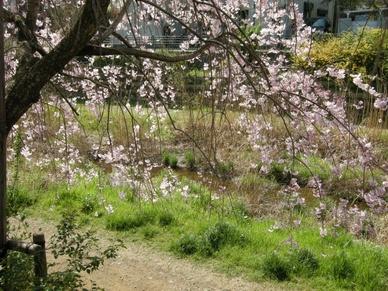 2009nogawa3_03