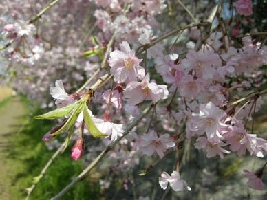2009nogawa3_06