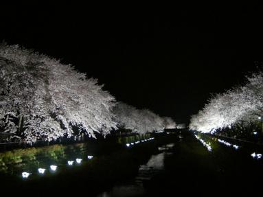 09yozakura_02