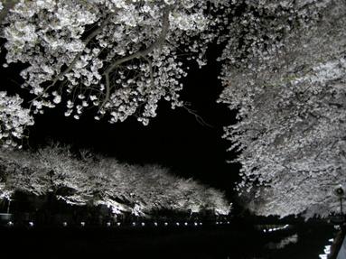 09yozakura_06