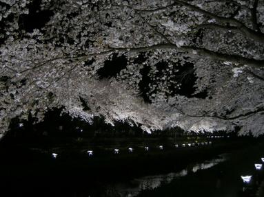 09yozakura_07
