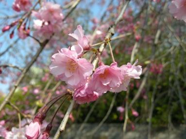 2009nogawa_02_2