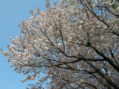 2009nogawa_03