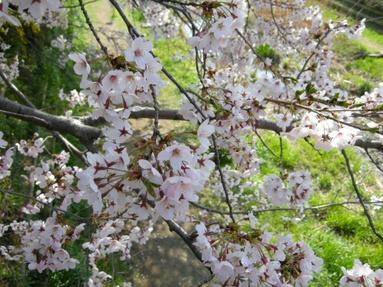 2009nogawa_05_3