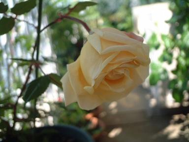 09perle_de_jardins