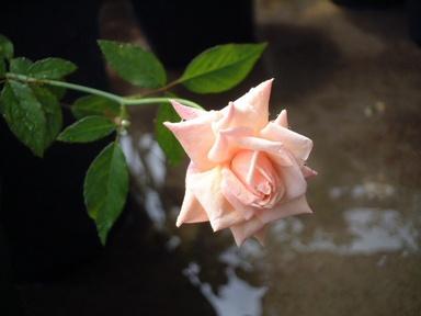09perle_de_jardins_01