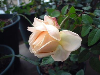 09perle_de_jardins_05