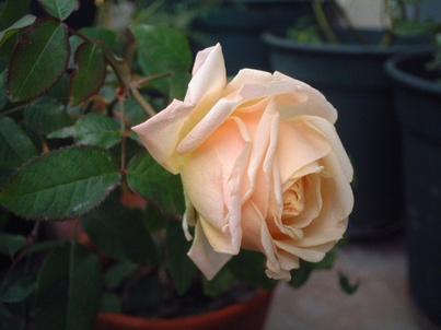 09perle_de_jardins_06_4
