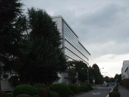 10himarayasugi_05