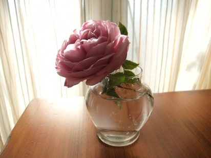11lylac_rose