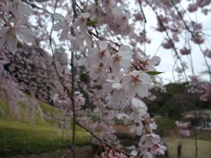 11koishikawa_06