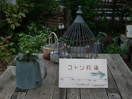11kotori_hanaten_05