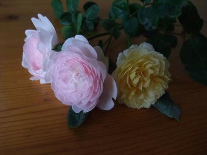 11english_roses