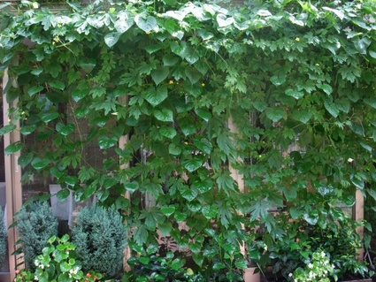 11green_curtain_04
