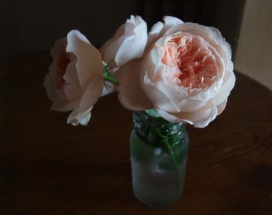 11ambridge_rose_2