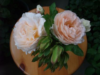 12ambridge_rose_09