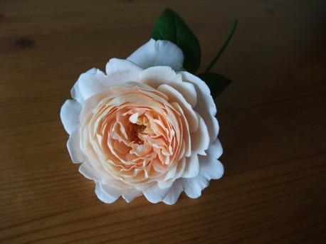 12ambridge_rose_03
