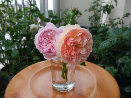 12english_roses_01