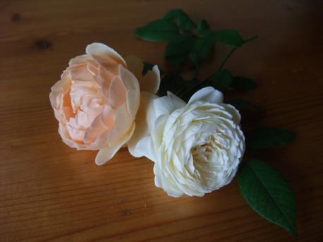 12english_roses_06