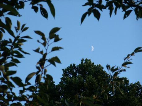 12crescent_moon_01