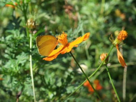 12butterfly