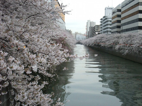 13megirogawa_2