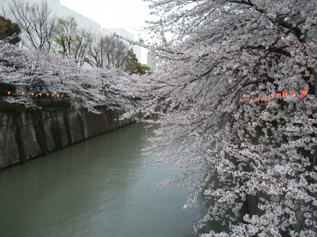 13megurogawa_06