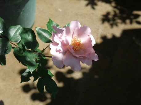13couture_rose_tilia_04_3