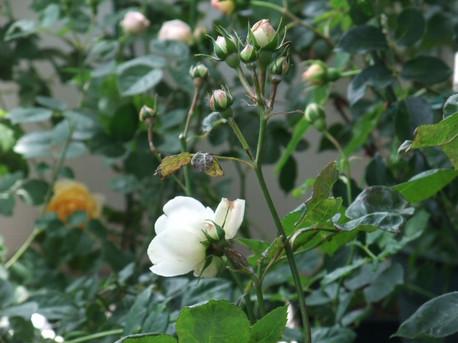 14secret_garden_02