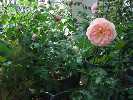 14secret_garden_03