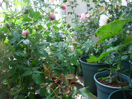 14secret_garden_04
