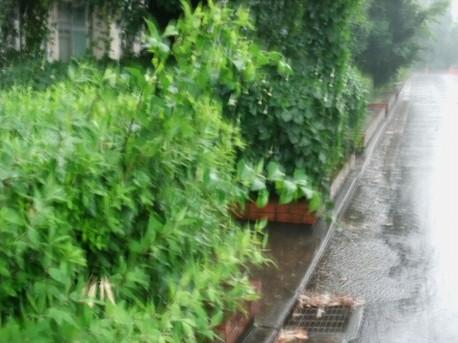 14heavy_rain