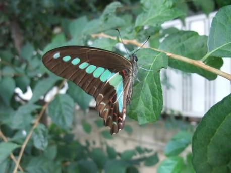14butterfly