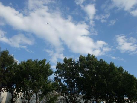 14free_as_a_bird_2