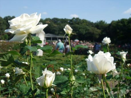 14jindai_botanical_park