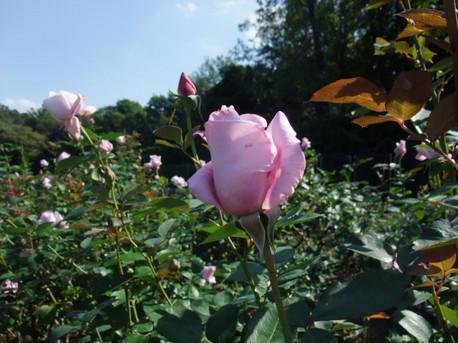 14jindai_botanical_park_01