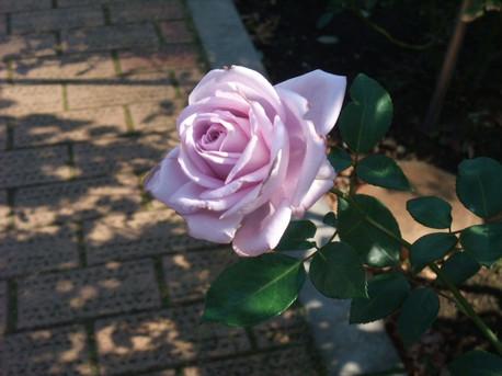14jindai_botanical_park_02