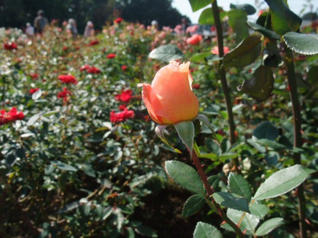 14jindai_botanical_park_09